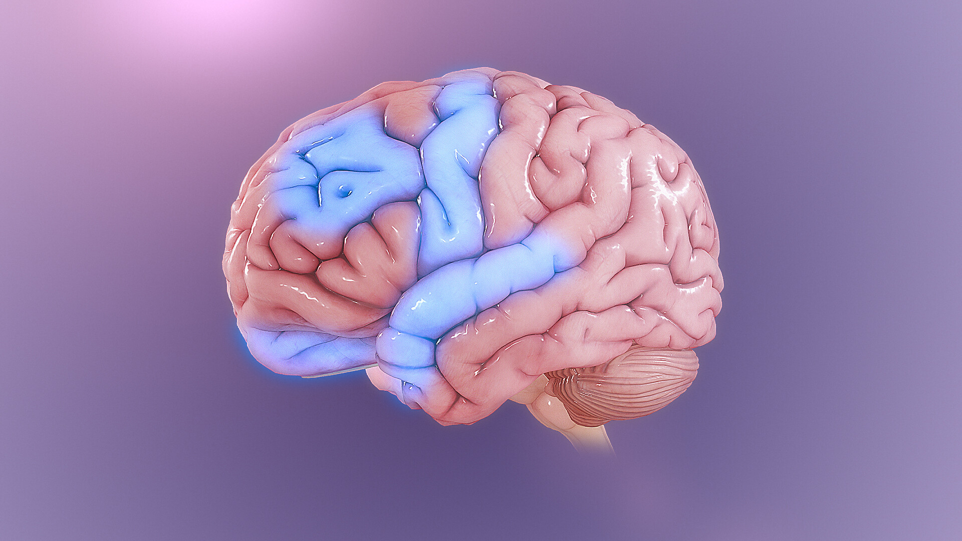 ocd_brain
